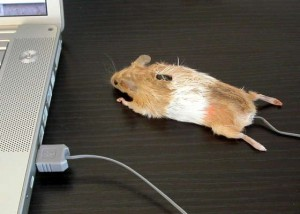 Instructables' Mouse Mouse may be taking maker culture a tad far....