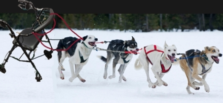 Some friends of ours are up in Alaska working the sled dog races. &quot;Someone&quot; photo shopped this picture to ask if he was disqualified because of an unorthodox sled?